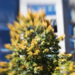 Springtime in New York - lens blurred i mages — Stock Photo