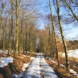 Forest in wintertime — Stock Photo