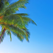palm, sky and ocean — Stock Photo