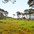 South African wilderness — Stock Photo #6547019