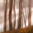 Early morning fog in the forest at sunrise — Stock Photo