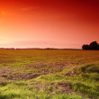 Sunset - the countryside - Stock Photo