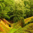 A photo of green and lush forest — Stock Photo