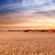 Sunset at the countryside - time for harvest — Stock Photo #6547394