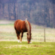 Royalty-Free Stock Photo: Brown horse and grass