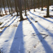 Stock Photo: Forest in wintertime