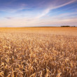 Famland - harvest and sunset — Stock Photo