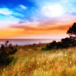 Country sunset by the sea — Stock Photo