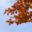 autumn colors — Stock Photo