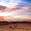 Sunset at the countryside - time for harvest — Stock Photo #6547679
