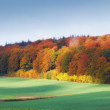 Autumn rainbow colors in the forest — Stock Photo #6548088
