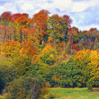 Autumn rainbow colors in the forest — Stock Photo