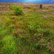 Stock Photo: Heather landscape