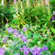 Blue garden flowers — Stock Photo #6548305