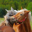 Loving horses — Stock Photo