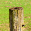 Old fence post in the country — Stock Photo