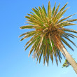 Stock Photo: Beautiful palm tree and blue sky