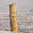 Fence post in wintertime — Stock Photo