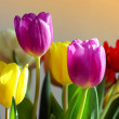 Colorful tulips — Stock Photo #6548974