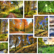 Wonderful autumn — Stock Photo