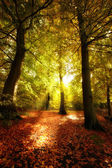 The forest in autumn - colorful — Stock Photo