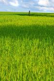 Tarım arazileri - arka plan olarak yararlı — Stok fotoğraf