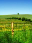 デンマークの田園地帯 — ストック写真
