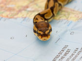 Snake invasion - symbolic content — Stock Photo