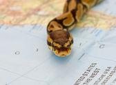 Snake invasion - symbolic content — Stock Photo