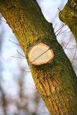 Erken baharda bir ağaç fotoğrafı — Stok fotoğraf