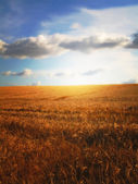 Farmland - sunset — Stock Photo