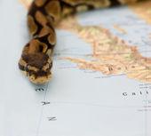 Snake invasion — Stock Photo