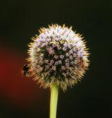 Fiore — Foto Stock