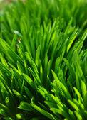 Huge grass in springtime — Stock Photo