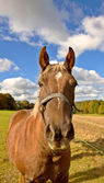 Brown horse outdoor on a sunny day — Stock Photo