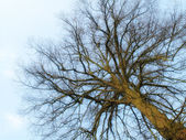 Winter tree- useful as background — Stock Photo