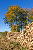Woodpile - outdoor in nature at autumn — Stock Photo