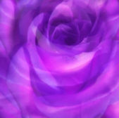 Purple roses on top of one another - background — Stock Photo
