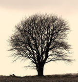 A concept photo of a lonely tree - lots of copyspace — Stock Photo