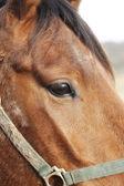 Une photo de la soirée de la tête d'un cheval brun — Photo