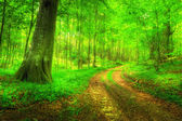 Lush forest - the Danish saturated forests — Stock Photo