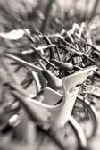 Lente borrosas bicicletas — Foto de Stock