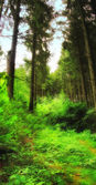 A photo of lush and saturated forest — Stock Photo