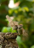 Sparrows fighting a summer day — Stock Photo