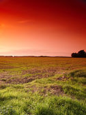 Sunset - the countryside — Stock Photo