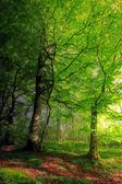 郁郁葱葱的森林 — 图库照片