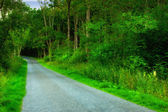 A photo of a road in the forest — Stock Photo