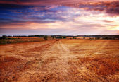 Countryside sunset - harvest — Stock Photo