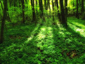 A very sharp and detailed photo of the famous saturated Danish forest in sp — Stock Photo