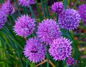 Güzel çiçek — Stok fotoğraf